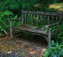 Bench - Pacific Rim Bonsai Collection and Rhododendron Garden by tjbenator