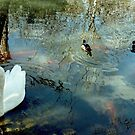 Swan and Ducks by Susan Russell