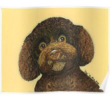 Joey, the Poodle Mix Poster
