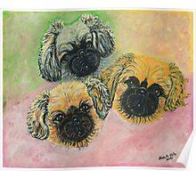 Pekingese Puppies Poster