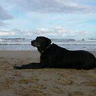 Rocket at Corindi Beach by aussiebushstick