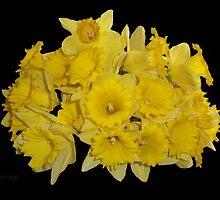 Daffodils on Ebony by LoneAngel