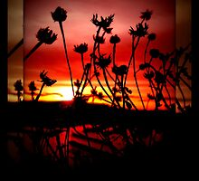 Sunset view Through the Weeds by AngieBanta