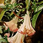 Angel Trumpet by Marie Luise  Strohmenger