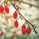Winter Berries by Sharon Woerner
