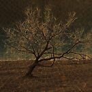 The Leaning Tree by Zi-O