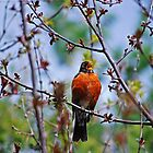 The Robin Sings Again by Diane Blastorah