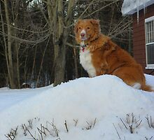 King of the Hill - Dog Style by MaryinMaine