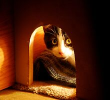 Stray Cat - Trouble - Playing Peek A Boo Before Bedtime by KevinsView