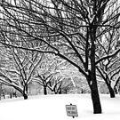 snowy winter day, bronx, new york city by Alberto  DeJesus