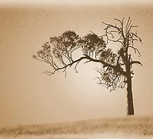 Old tree in sepia by Mark Freeman