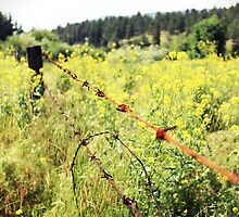 Barbed Wire by sarpat