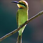 Rainbow Bee-Eater, Windjana Gorge NP by Earthboundimage