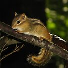 Eastern Chipmunk in Enchanted Forest by Robert Miesner