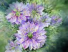 Love in a Mist (Nigella) by Ann Mortimer