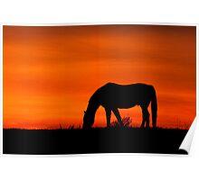 Horse at Sunset  Buckinghamshire  UK Poster