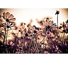 Dance with the wind...: EXPLORE Featured Work; Sold 3, Got 3 Featured Works Photographic Print
