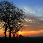 Trees in a Sunset Sky by ienemien