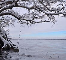 Lake Drummond Winter Blues by Michele Conner