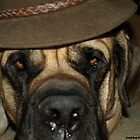 One Cool Mastiff by Gretchen Mayberry