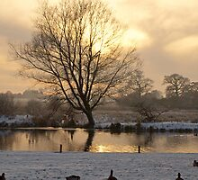 Winter's Afternoon by Gerry  Balding