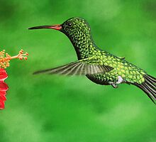 Emerald Hummingbird by Robbie Labanowski