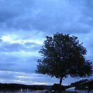 Magritte Tree - Henley on Thames by Agaricus