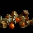 Ground Cherries - Still life by Erin Fitzgibbon