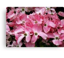 Pink Dogwood Canvas Print