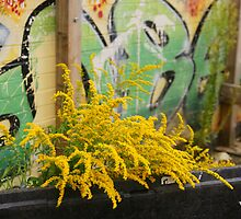 Urban Flower Arranging by Cliff Williams