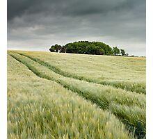 Fields of barley Photographic Print
