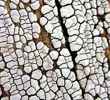 Ceramic Clay Fungi by Carla Wick/Jandelle Petters