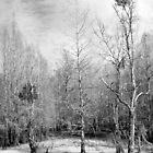 Dead of Winter by RebeccaBlackman
