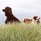 Bella & Sedge by Helen Green