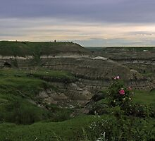 Horseshoe Canyon by Michael Collier