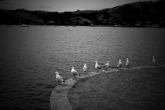 gulls day off by Glenn Browning