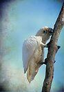 White Cockatoo II by yolanda