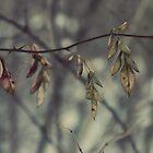 Leaves by Natalie Pozniak