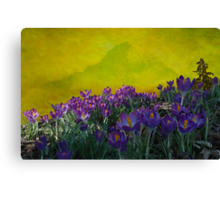Spring in Washington State Canvas Print