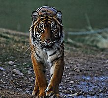 On the Prowl  by Saija  Lehtonen