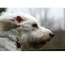 my dog at 40mph Photographic Print