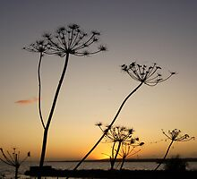 weed sunset by steven boyles