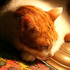 Silki My Cat by Nira Dabush