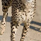 Cheetah On the Run by Michael  Moss