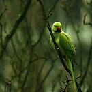 Tropical bird invading Western Europe by steppeland