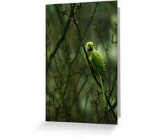 Tropical bird invading Western Europe Greeting Card