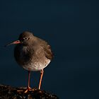 Redshank by Jon Lees