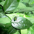 Sweetleaf Greens with a Beetle by D. D.AMO