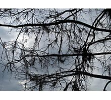 Bare Branches - December in Bayou George, FL Photographic Print