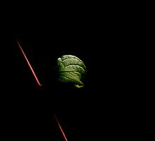 Single leaf by pulen